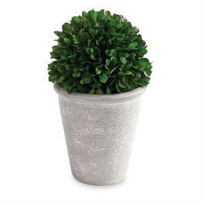 Short Ball Preserved Boxwood Topiary – Mudpie