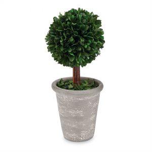 Ball Preserved Boxwood Topiary – Mudpie